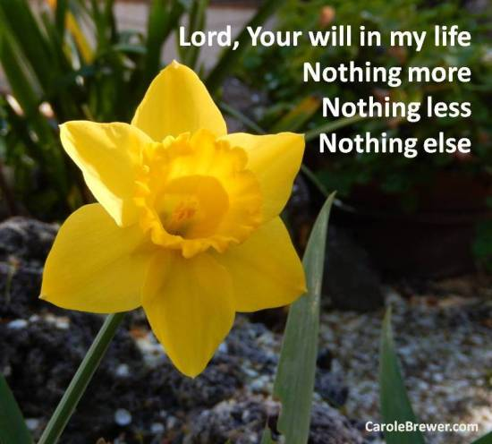 Lord, Your will in my life- daffodil